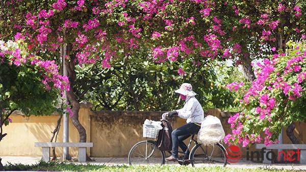 """Khách du lịch mê mẩn """"thành phố hoa giấy"""" Nha Trang - 5"""