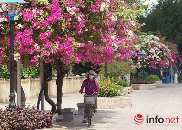 """Khách du lịch mê mẩn """"thành phố hoa giấy"""" Nha Trang - 6"""