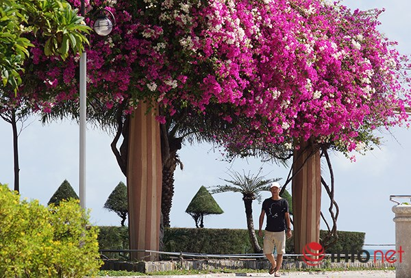 """Khách du lịch mê mẩn """"thành phố hoa giấy"""" Nha Trang - 7"""