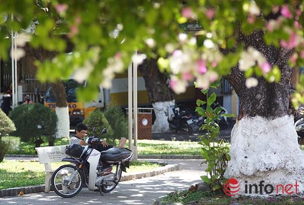 """Khách du lịch mê mẩn """"thành phố hoa giấy"""" Nha Trang - 8"""