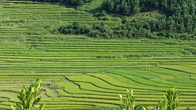"""Ngỡ ngàng """"Sa Pa ở Quảng Ninh"""" - 1"""