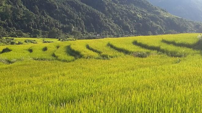 """Ngỡ ngàng """"Sa Pa ở Quảng Ninh"""" - 7"""