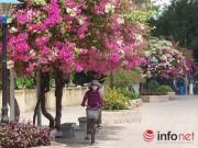 """Du lịch - Khách du lịch mê mẩn """"thành phố hoa giấy"""" Nha Trang"""