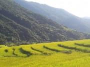 """Du lịch - Ngỡ ngàng """"Sa Pa ở Quảng Ninh"""""""