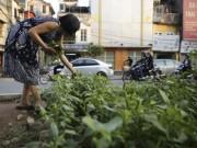 """Tin tức trong ngày - Gặp """"nông dân phố"""" trồng rau dưới đường sắt trên cao"""