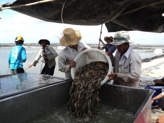 """Nông, thủy sản """"hụt"""" hàng tỉ USD - 1"""