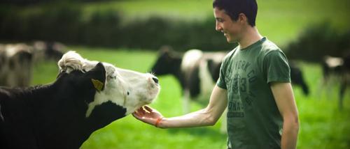 Một ngày ở trang trại những cô bò hạnh phúc - 2