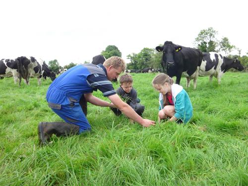 Một ngày ở trang trại những cô bò hạnh phúc - 1