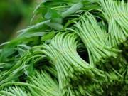 Sức khỏe đời sống - Cách ăn rau muống đúng cách để loại bỏ độc tố