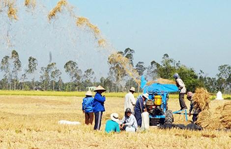 Gạo Việt biến mất trên thị trường hội nhập - 1