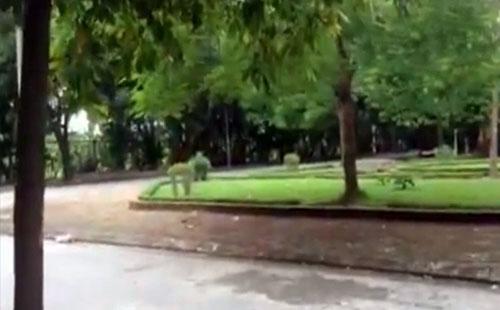 Hà Nội: Bé trai 3 tuổi bị bắt cóc ngay trước cửa nhà - 1