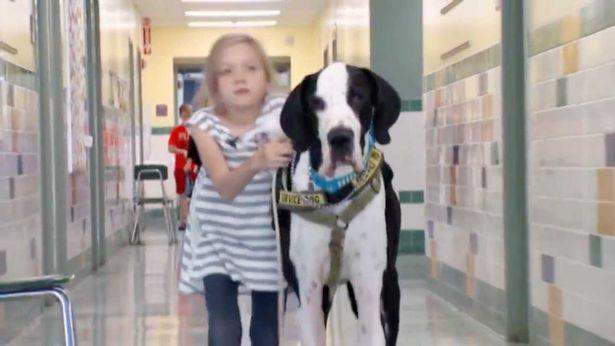 """Chú chó làm """"nạng di động"""" cho cô chủ nhỏ - 1"""