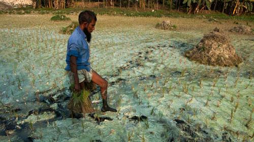 Ảnh: Sống trong cảnh ô nhiễm dễ sợ ở Bangladesh - 3