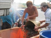 """Thị trường 24h - Trung Quốc """"điều khiển"""" thị trường thủy sản Việt"""