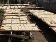 Tin tức Việt Nam - Clip hãi hùng công nghệ sản xuất cơm cháy chà bông