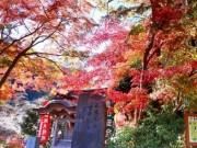 Du lịch - Ngất ngây sắc thu ở Nhật Bản