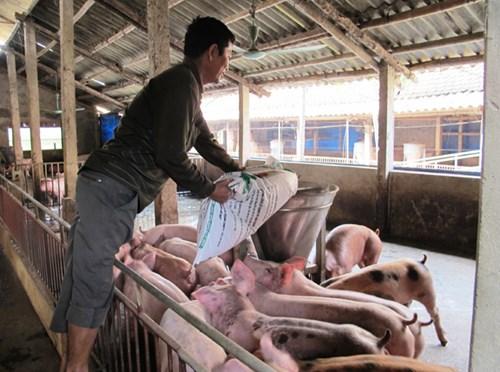 Dùng chất cấm trong chăn nuôi: Kiến nghị quy định thành tội danh - 2