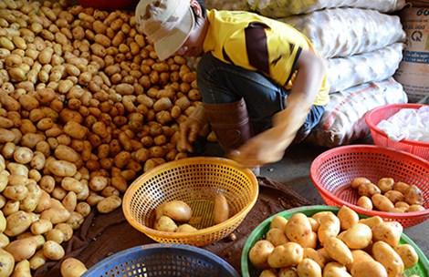 Đà Lạt lại cho khoai tây Trung Quốc vào chợ - 1