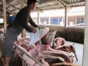Thị trường - Tiêu dùng - Dùng chất cấm trong chăn nuôi: Kiến nghị quy định thành tội danh