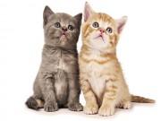 Bạn trẻ - Cuộc sống - Bạn sẽ thay đổi suy nghĩ về mèo sau khi xem clip này