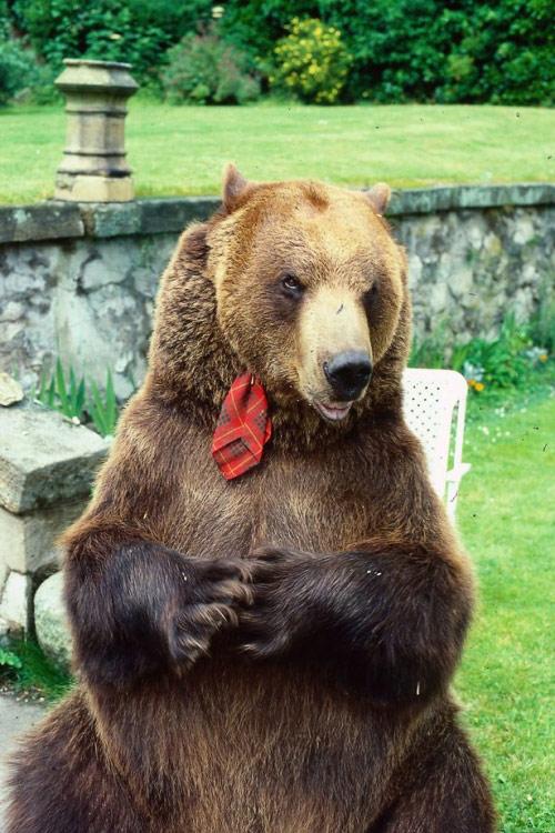 Cặp vợ chồng nhận chú gấu 70 kg làm con nuôi - 1