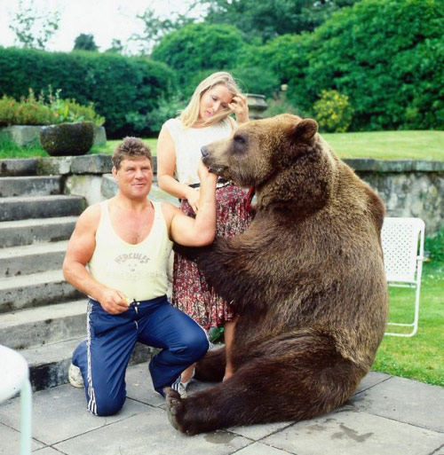 Cặp vợ chồng nhận chú gấu 70 kg làm con nuôi - 2