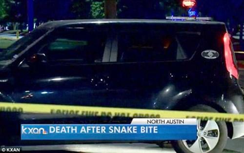 Thanh niên yêu động vật ngồi yên để rắn độc cắn đến chết - 1