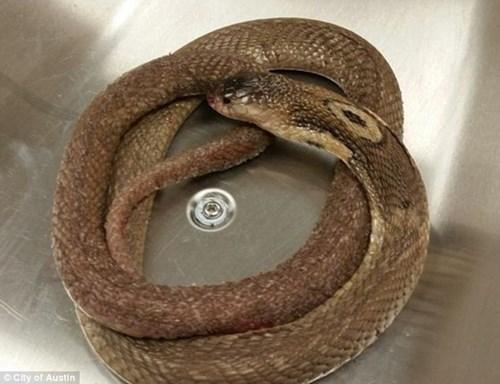 Thanh niên yêu động vật ngồi yên để rắn độc cắn đến chết - 2