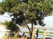Tin tức trong ngày - Đi làm đồng, hoảng hồn phát hiện xác người trên cây