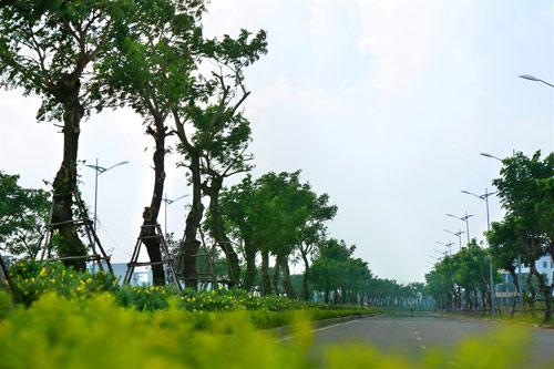 Khu đô thị sinh thái Hòa Xuân: Giá mềm, sống tiện nghi - 2