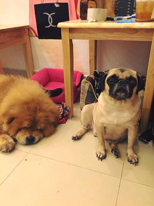 Xót xa 13 chú chó cưng của 9x Việt bị trúng độc - 4