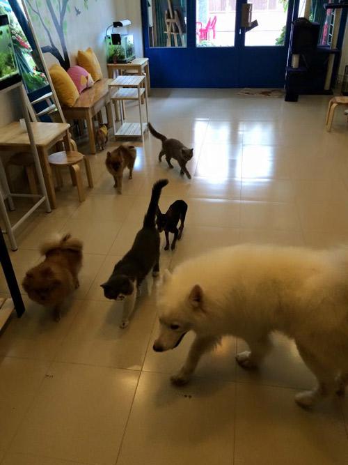 Xót xa 13 chú chó cưng của 9x Việt bị trúng độc - 5