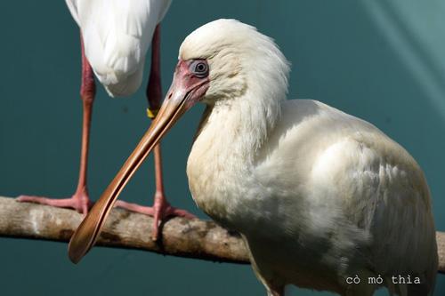 Vinpearl Safari Phú Quốc đón đợt động vật quý hiếm đầu tiên - 4