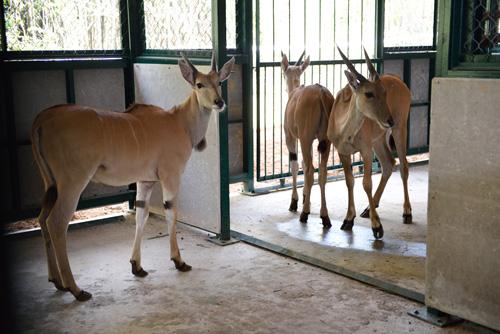 Vinpearl Safari Phú Quốc đón đợt động vật quý hiếm đầu tiên - 5