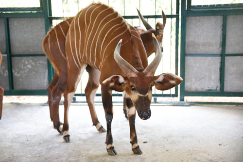 Vinpearl Safari Phú Quốc đón đợt động vật quý hiếm đầu tiên - 6