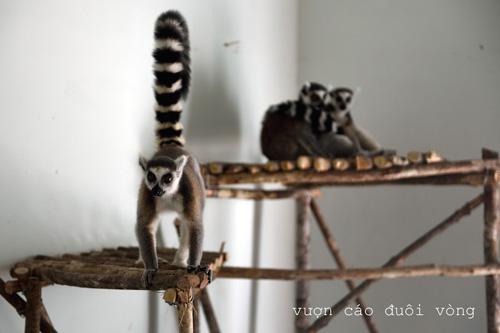Vinpearl Safari Phú Quốc đón đợt động vật quý hiếm đầu tiên - 3