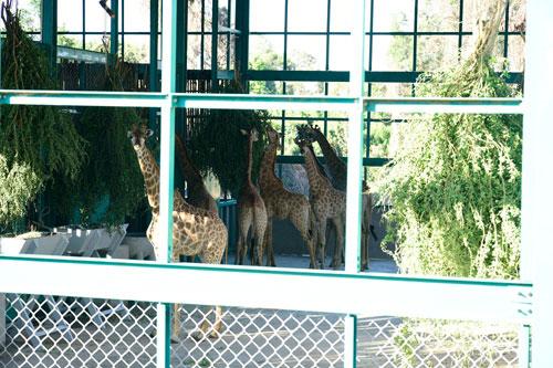 Vinpearl Safari Phú Quốc đón đợt động vật quý hiếm đầu tiên - 1