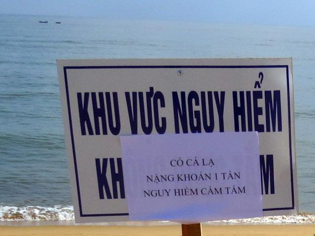 Cá lạ khổng lồ bơi dọc biển Tuy Hòa, cảnh báo nguy hiểm - 3