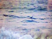 Tin tức trong ngày - Cá lạ khổng lồ bơi dọc biển Tuy Hòa, cảnh báo nguy hiểm