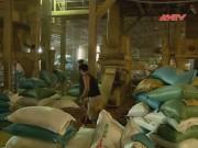 An ninh Kinh tế - Tiêu dùng - Nhiều DN trộn chất độc vàng ô vào thức ăn chăn nuôi
