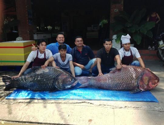 """Bắt được cặp cá hô """"khủng"""" nặng 240 kg - 3"""