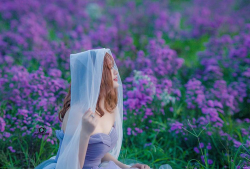 Nữ sinh mơ màng giữa cánh đồng lưu ly tuyệt đẹp - 1