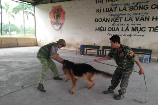 Hốt bạc từ nghề huấn luyện chó câm - 1