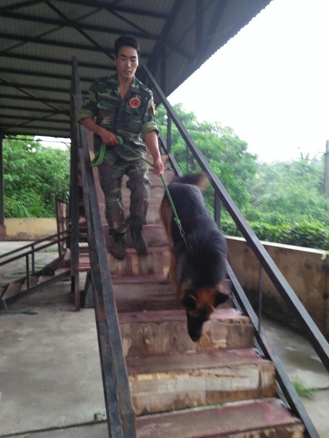 Hốt bạc từ nghề huấn luyện chó câm - 2