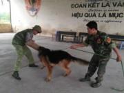 Tin tức Việt Nam - Hốt bạc từ nghề huấn luyện chó câm