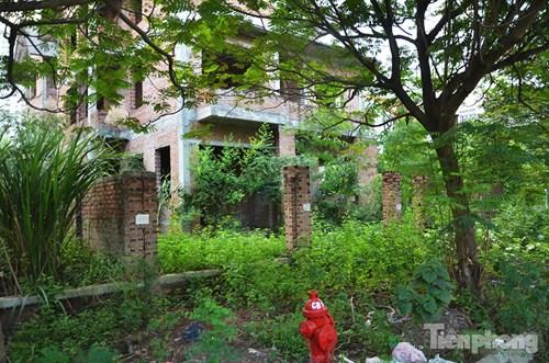 Biệt thự tiền tỉ bỏ hoang, cây cỏ dại mọc um tùm - 11