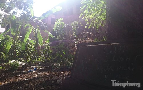 Biệt thự tiền tỉ bỏ hoang, cây cỏ dại mọc um tùm - 8