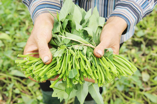 Những ai không nên ăn rau muống, rau ngót và rau dền? - 1