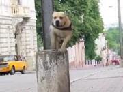 """Thể thao - Chú chó nhảy parkour """"đỉnh"""" nhất thế giới"""
