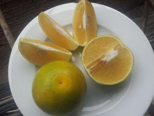 Cách chọn cam xoàn Việt ngon chuẩn xịn - 2